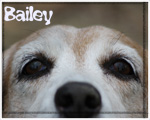 Bailey Photos